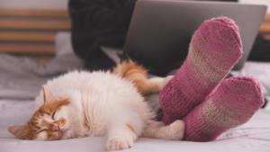 WFH cat bed